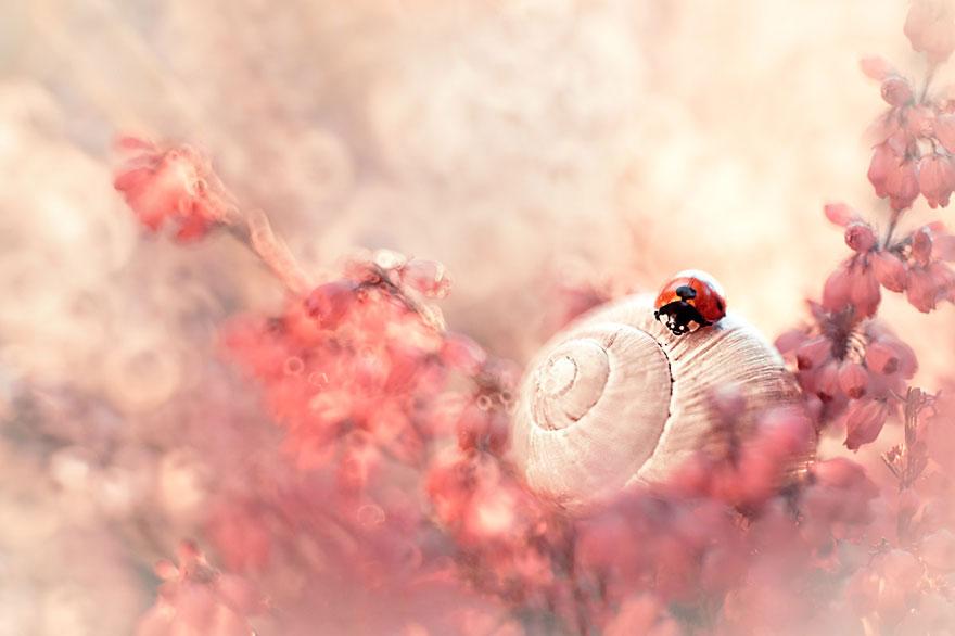 Polish photographer creating fairytale macro world (9)
