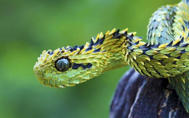 Самые Прекрасные И Необычные Животные На Земле. (10)
