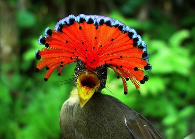 Самые Прекрасные И Необычные Животные На Земле. (18)