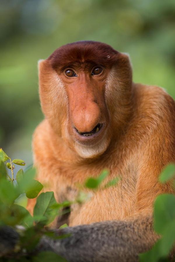 Самые Прекрасные И Необычные Животные На Земле. (25)