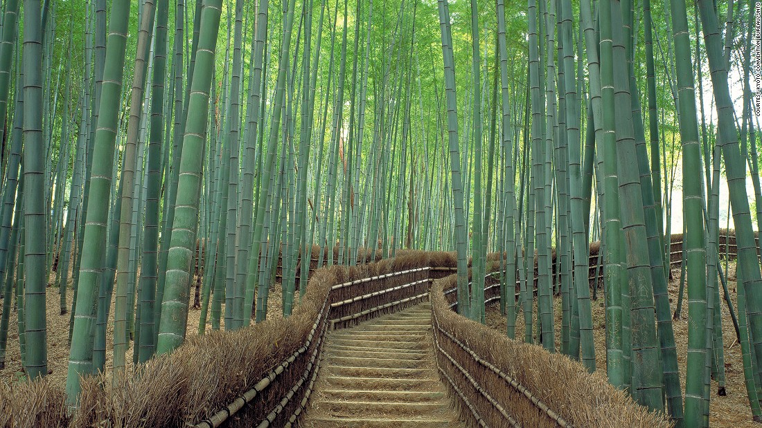Most Beautiful Places In Japan (6)