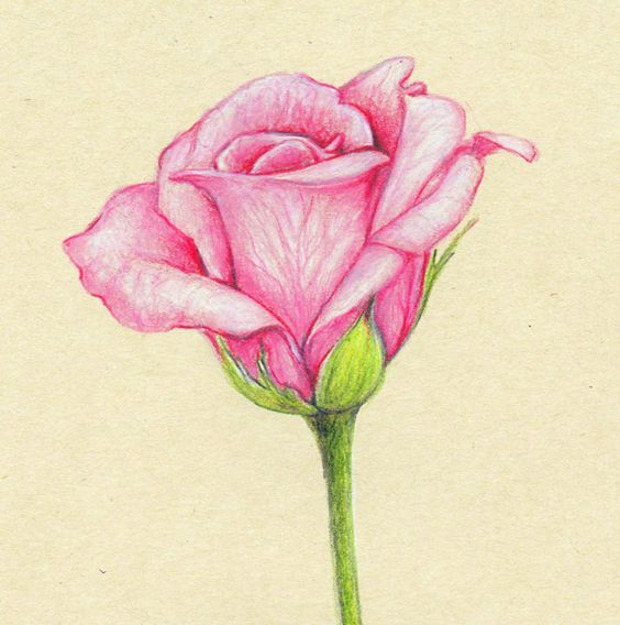 Beautiful Nature Pencil Drawings: Beautiful Color Pencil Drawings