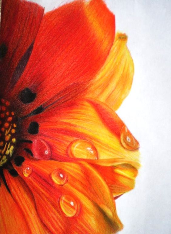 Beautiful Color Pencil Drawings | Great Inspire