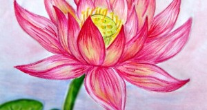 Beautiful Color Pencil Drawings (8)