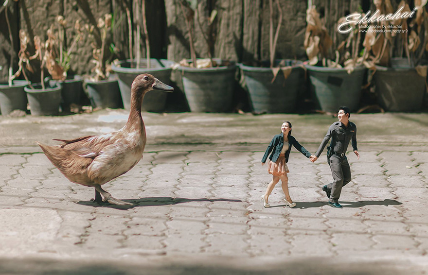 Clever Wedding Photographer Turns Couples Into Miniature People (21)