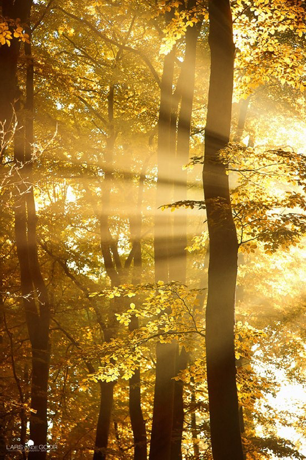Gorgeous Sunshine Pictures (11)