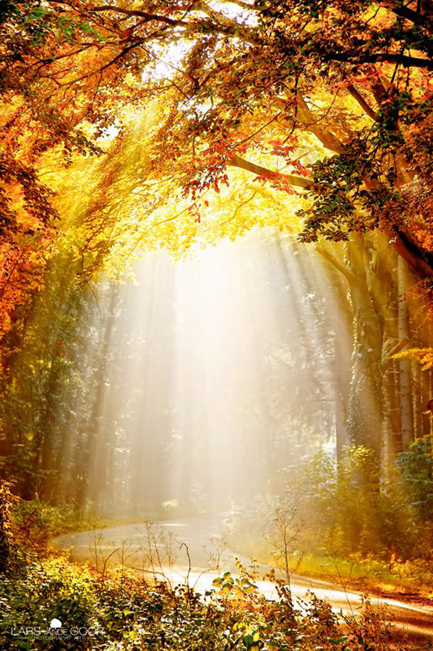 Gorgeous Sunshine Pictures (12)
