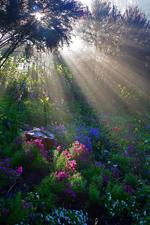 Gorgeous Sunshine Pictures (14)