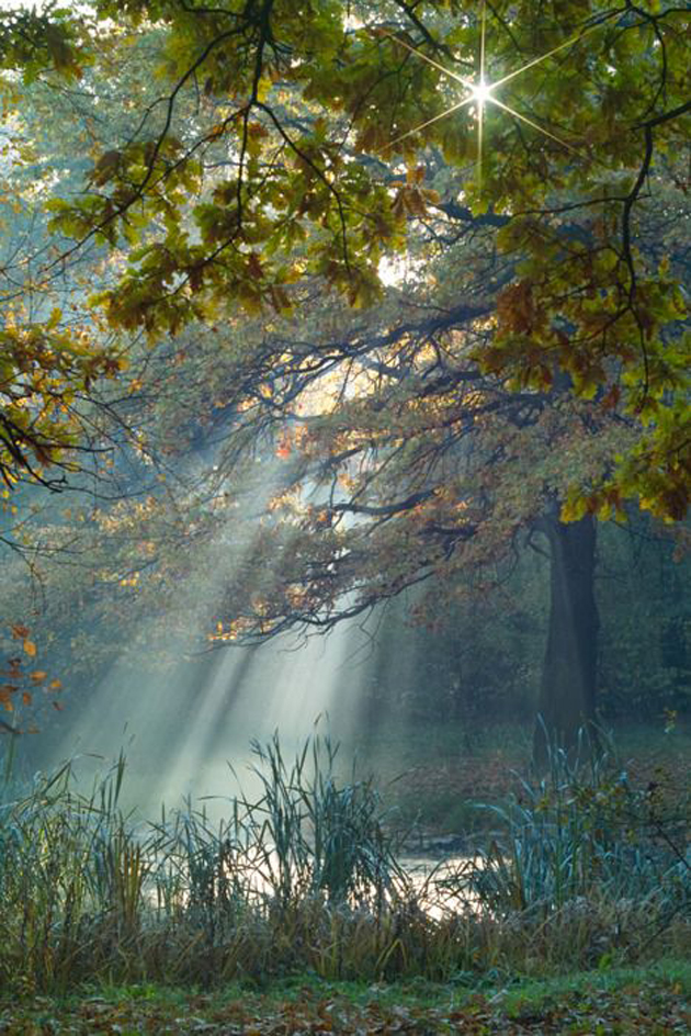 Gorgeous Sunshine Pictures (26)