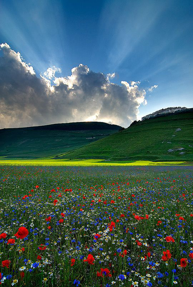 Gorgeous Sunshine Pictures (29)
