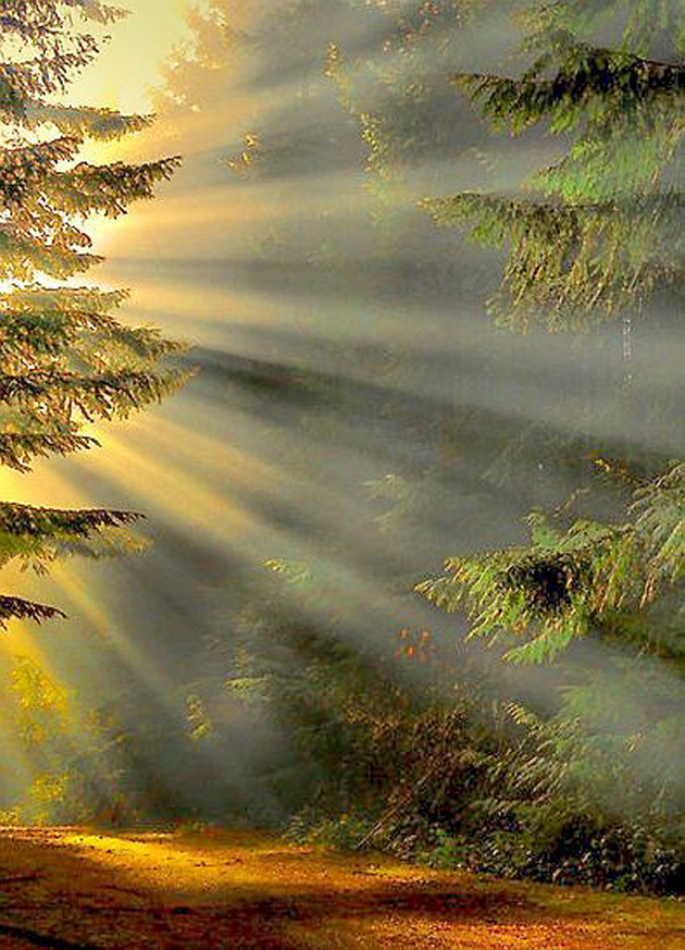 Gorgeous Sunshine Pictures (32)