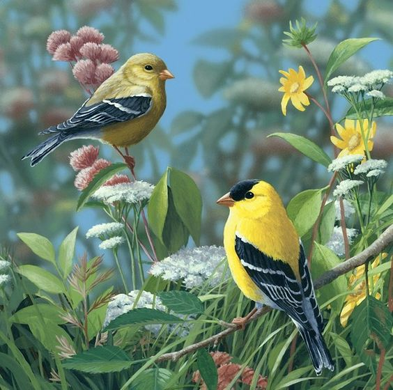 Realistic Oil Painting of Birds (15)