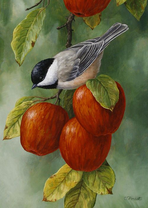 Realistic Oil Painting of Birds (22)