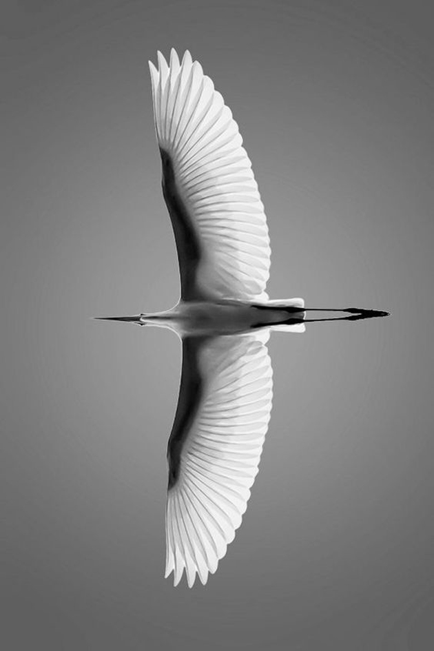 high speed photography birds (1)