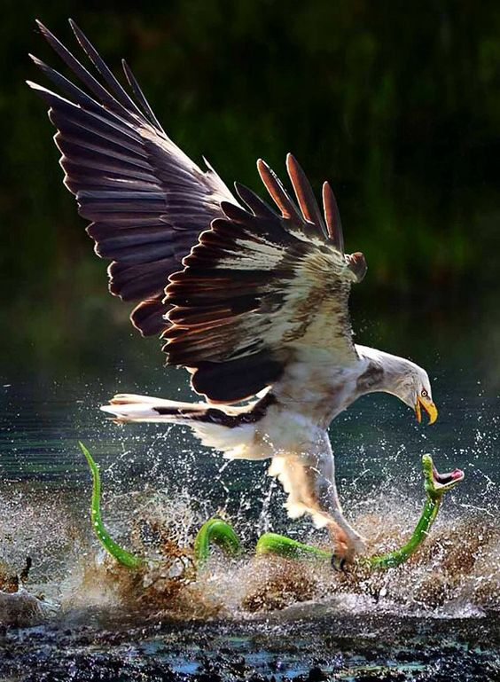 high speed photography birds (22)