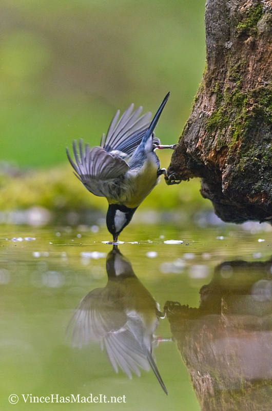 high speed photography birds (23)