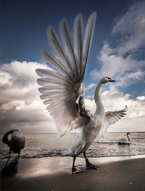 high speed photography birds (24)