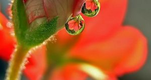 amazing-water-drop-images-19