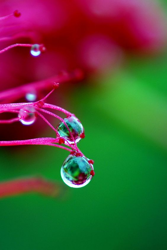 Amazing Water Drop Images Great Inspire