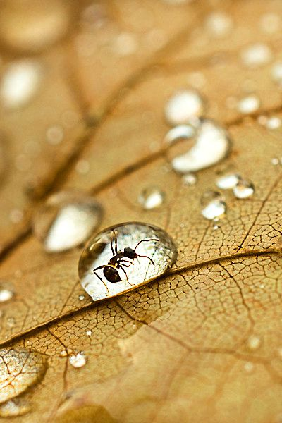 amazing-water-drop-images-23
