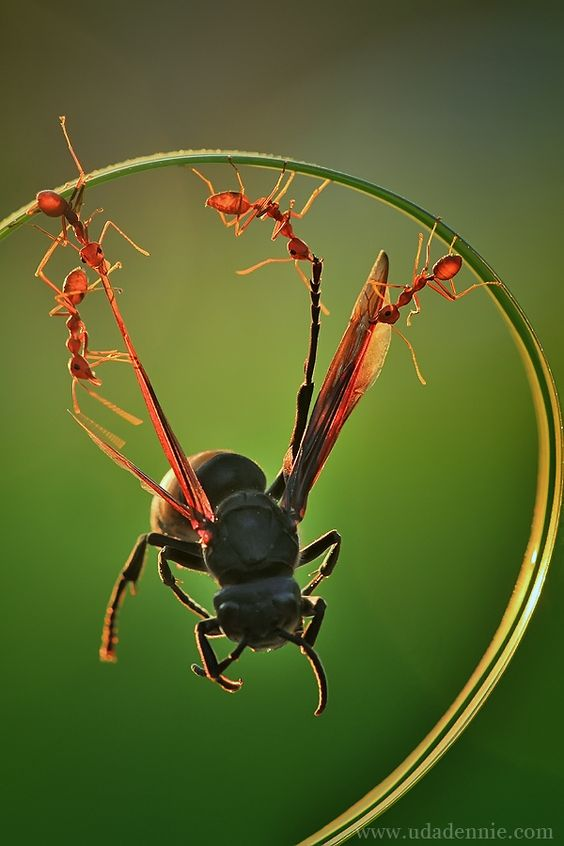 awesome-ant-photography-1
