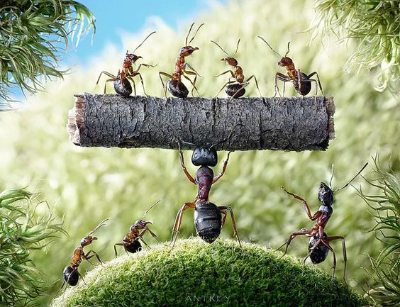 awesome-ant-photography-10
