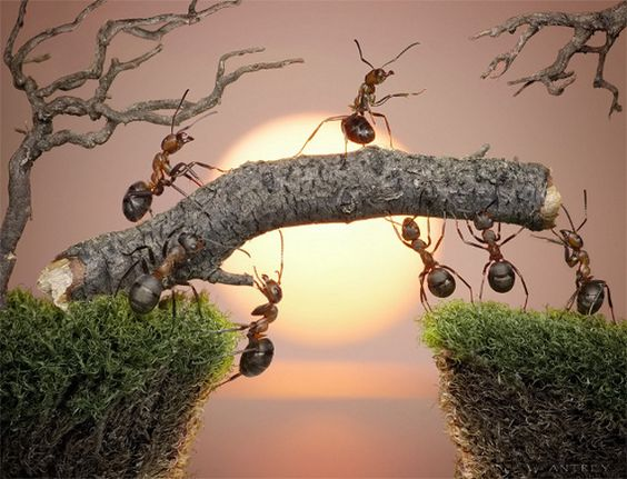 awesome-ant-photography-11