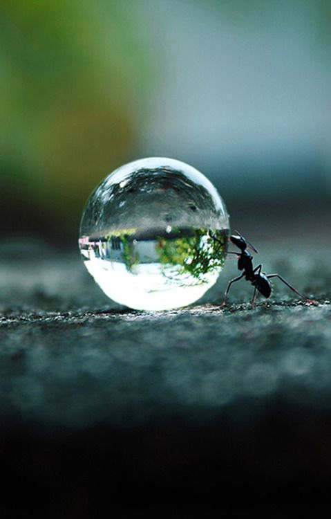 awesome-ant-photography-16