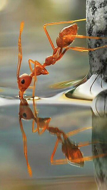 awesome-ant-photography-17