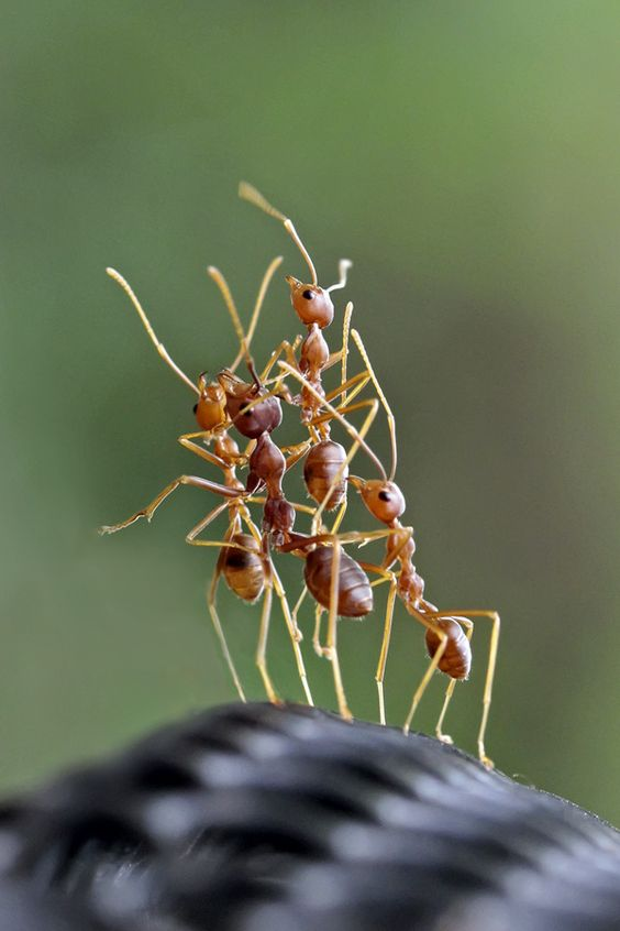 awesome-ant-photography-2