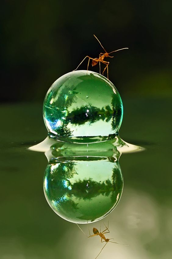 awesome-ant-photography-3