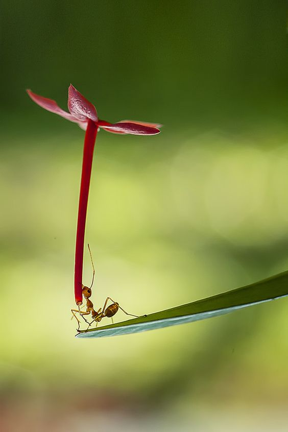 awesome-ant-photography-4