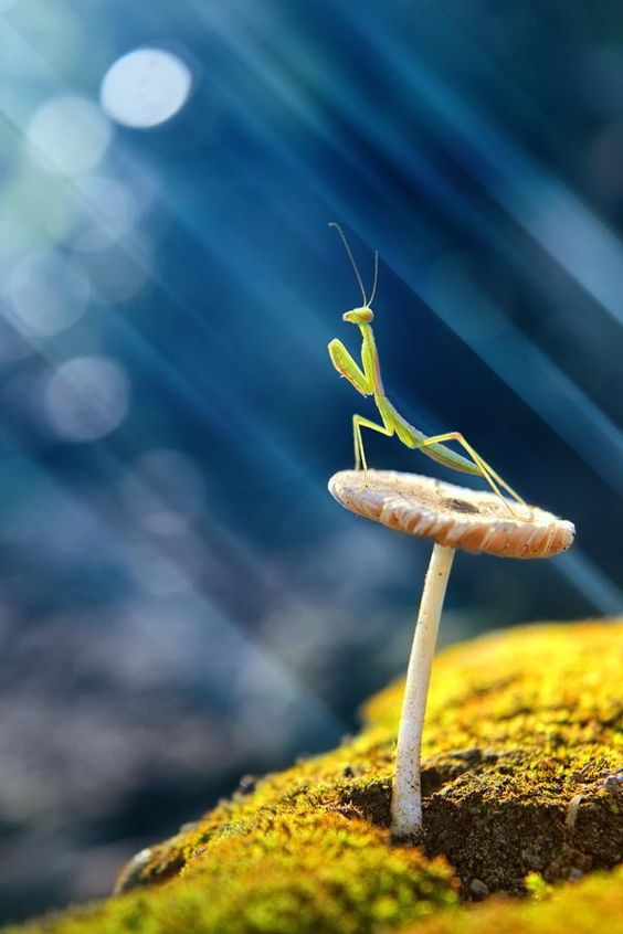 awesome-ant-photography-5