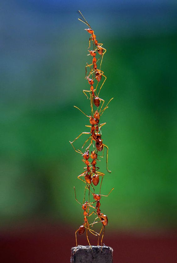 awesome-ant-photography-7