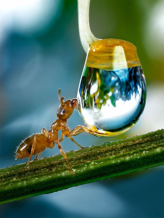 awesome-ant-photography-8
