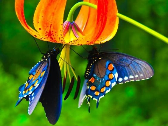 colorful-and-stunning-butterfly-photography-10
