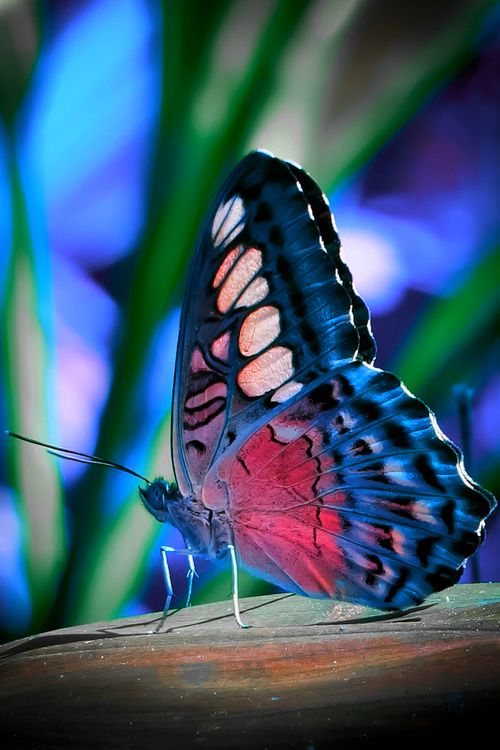 colorful-and-stunning-butterfly-photography-12