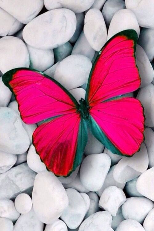 colorful-and-stunning-butterfly-photography-13