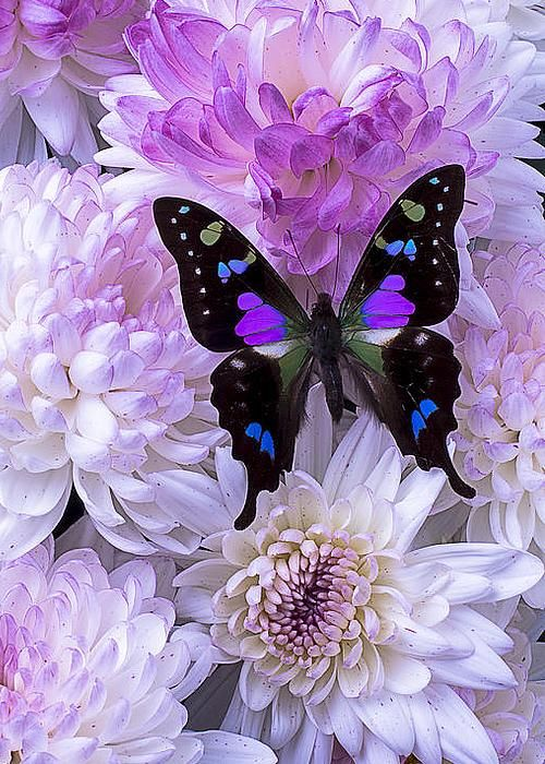 colorful-and-stunning-butterfly-photography-14
