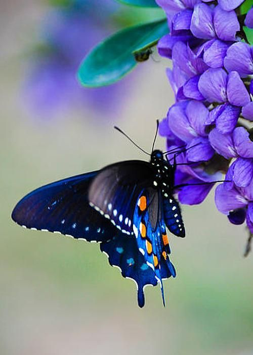 colorful-and-stunning-butterfly-photography-15