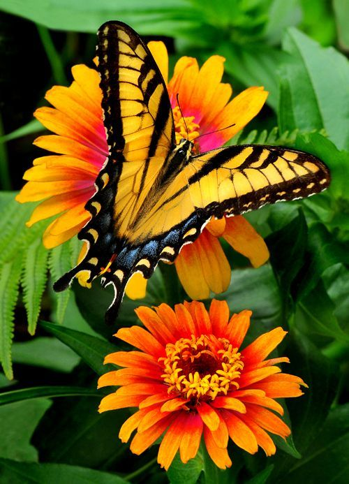colorful-and-stunning-butterfly-photography-16