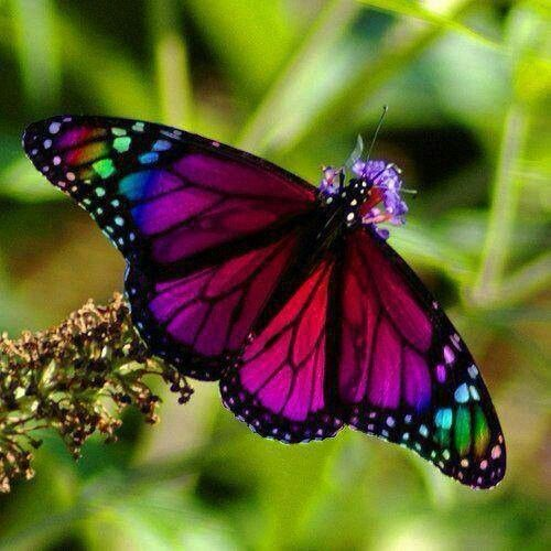 colorful-and-stunning-butterfly-photography-17