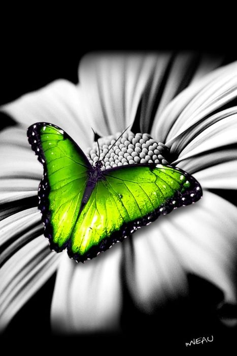 colorful-and-stunning-butterfly-photography-18