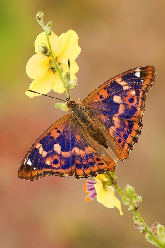 colorful-and-stunning-butterfly-photography-2
