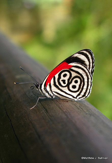 colorful-and-stunning-butterfly-photography-21