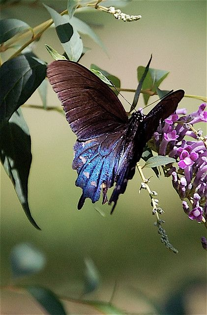 colorful-and-stunning-butterfly-photography-23