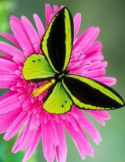 colorful-and-stunning-butterfly-photography-24