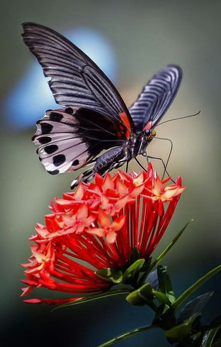 colorful-and-stunning-butterfly-photography-27