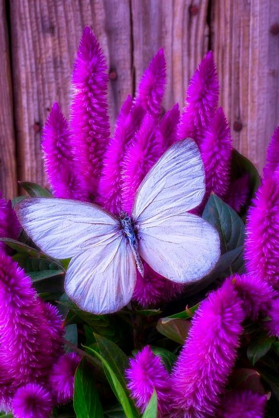 colorful-and-stunning-butterfly-photography-3