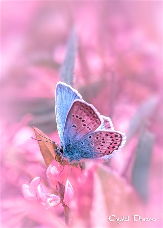 colorful-and-stunning-butterfly-photography-6